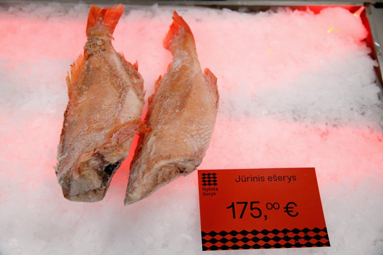 Anot E. Greimo, ateityje žuvis gali kainuoti itin brangiai, mat vartotojai nesuvokia, kaip sparčiai nyksta jų pamėgtos žuvys.<br>R. Danisevičiaus nuotr.