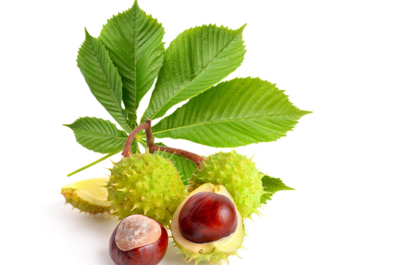 Naudingųjų medžiagų turi ne tik kaštonų vaisiai.<br>123rf.com asociatyvioji nuotr.