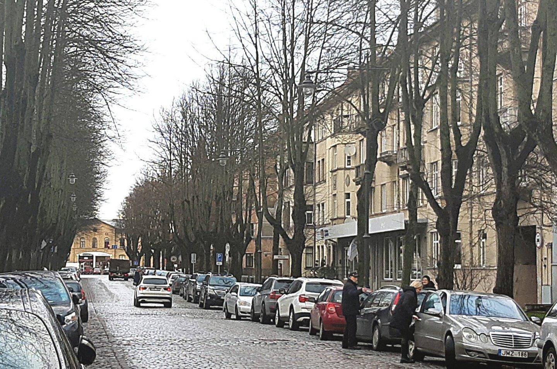 Specialistų vertinimu, dauguma liepų Klaipėdos S.Nėries gatvėje yra prastos būklės – jų kamienai paveikti puvinio.<br>A.Pilaitienės nuotr.