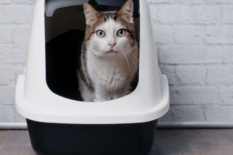 Jei katė jaus skausmą, naudodamasi kraiko dėžute, gali atsisakyti į ją eiti.<br>Partnerio nuotr.