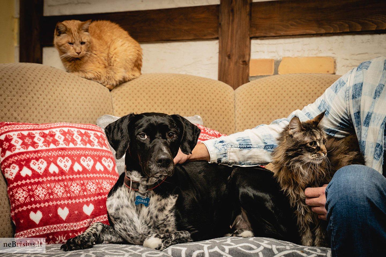 """""""Visi mūsų kačiukai ir šuniukai yra mūsų šeimos nariai. Dažnai su vyru vadiname juos mūsų vaikais"""", – pasakojo Eva ir Robertas.<br>J. Baliūnienės nuotr."""