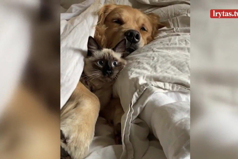 Kačiukas pabudo šuns glėbyje.<br>Momentinis kadras.