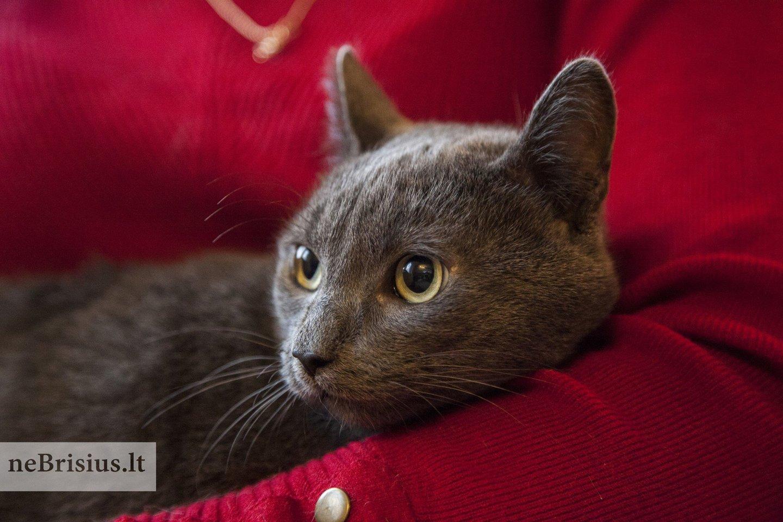 """Ramzis atkeliavo iš """"Katino svajonės"""" savanorių rankų.<br>V.Stirbio nuotr."""