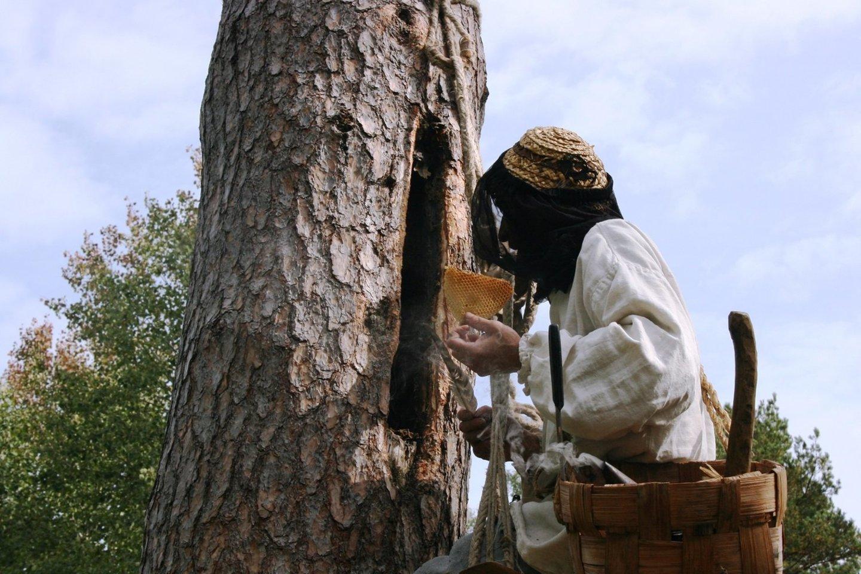Nematerialaus kultūros paveldo vertybių sąvade - drevinės bitininkystės tradicija.<br>Organizatorių nuotr.
