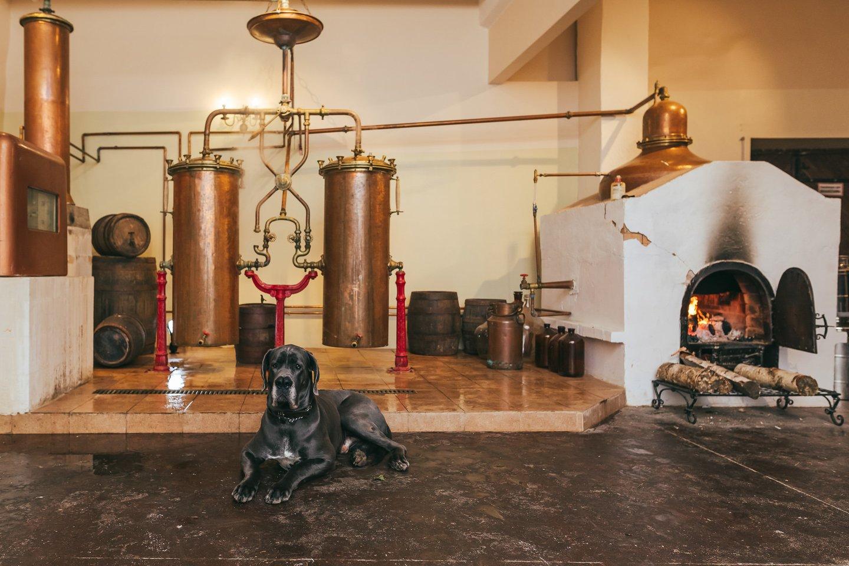 Prieš porą dienų Pakruojo dvaro distileriją pasiekė žinia iš JAV – lietuviškas gėrimas išrinktas geriausiu tarptautiniu likeriu.<br>Nuotr. iš Pakruojo dvaro archyvo.