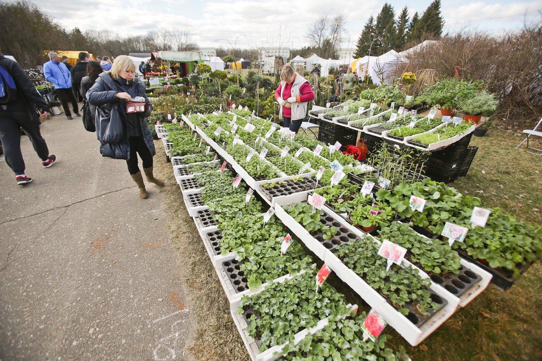 Tokios įprastinės pavasario prekybos nei sodinukais, nei gėlėmis nebebus.<br>G.Bitvinsko nuotr.