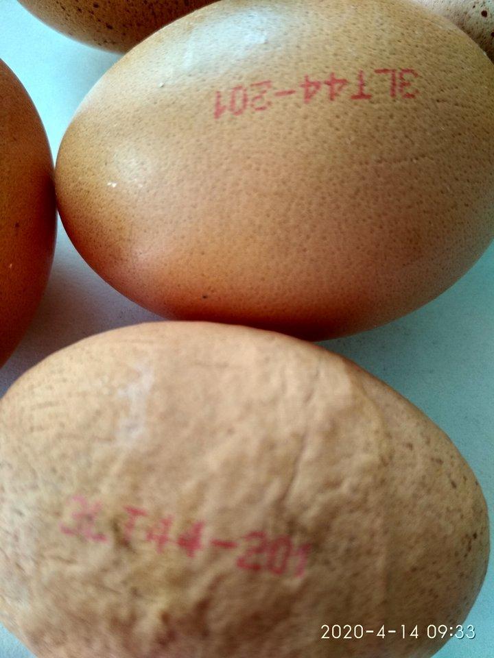 Likusius kiaušinius jonaviškė saugo kaip įrodymą.<br>Nuotr. iš asmeninio albumo.