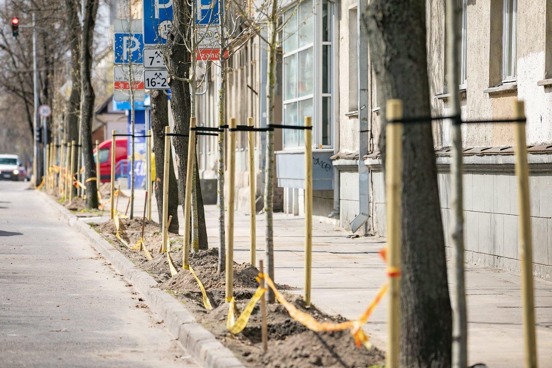 Vilniaus miesto savivaldybė pradeda naują miesto želdinimo kryptį.<br>Vilniaus miesto savivaldybės nuotr.