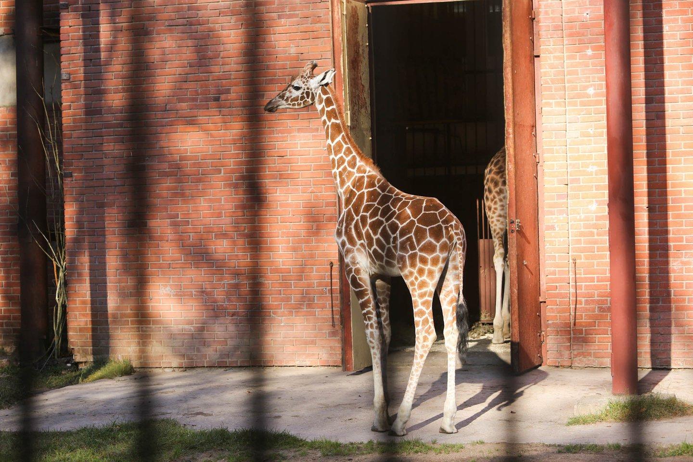 Lietuos zoologijso sodo gyventojai.<br>G.Bitvinsko nuotr.