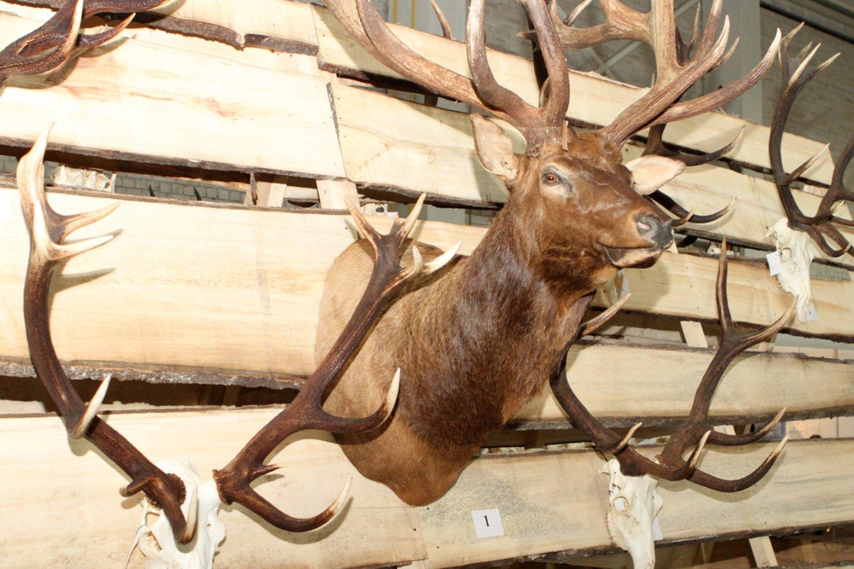 """Seimo narys B.Bradauskas yra pagarsėjęs medžiotojas. Jo būrelis """"Antanava"""" driekiasi daugiau nei 10 hektarų teritorijoje. Vasario pabaigoje Aplinkos apsaugos departamentas pasirašė įsakymą atimti iš būrelio """"Antanava"""" teisę naudotis medžioklės plotu.<br>M.Patašiaus nuotr."""