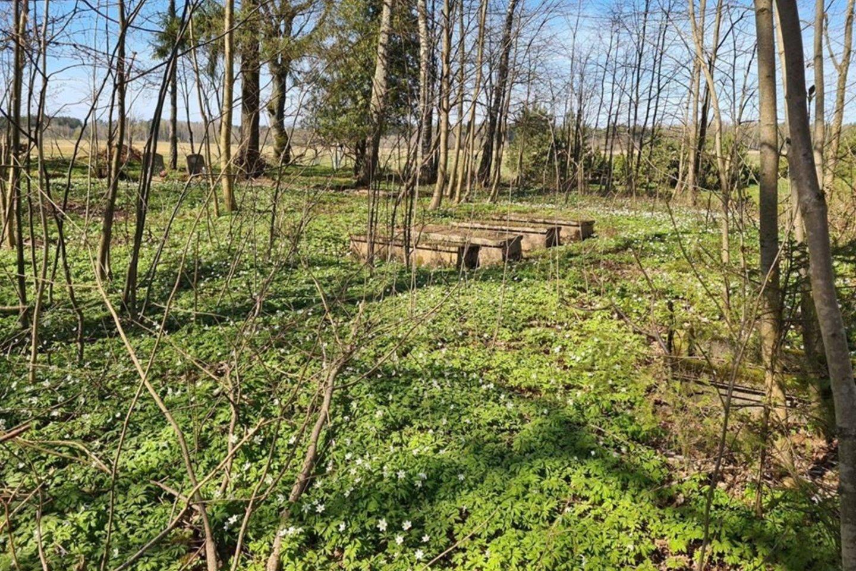 Laučių pirmosios senosios kapinės, kurios kažkokiu būdu tapo privatizuotos.<br>Asmeninio archyvo nuotr.