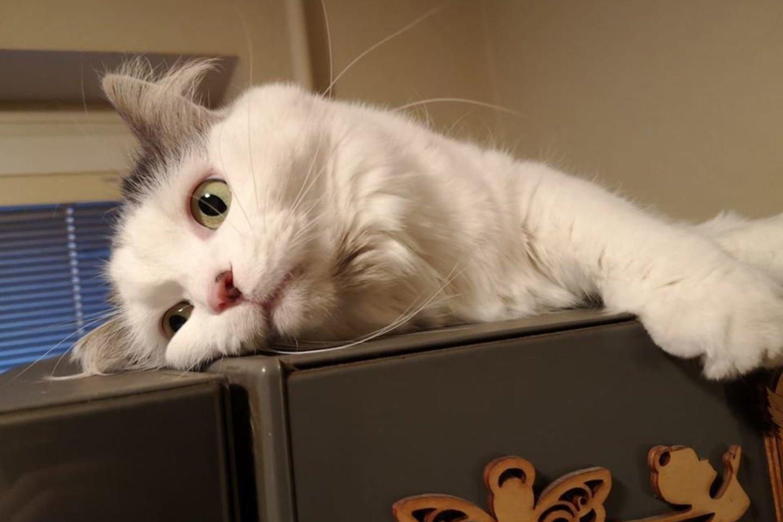 Katė Marusia taip pat dažnai šmėžuoja Audriaus feisbuko paskyroje.<br>Asmeninio archyvo nuotr.