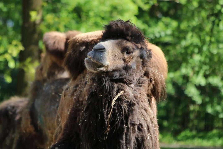 Gyvūnai zoologijos sode savo išvaizdą keičia kelis kartus per metus.<br>Lietuvos zoologijos sodo nuotr.
