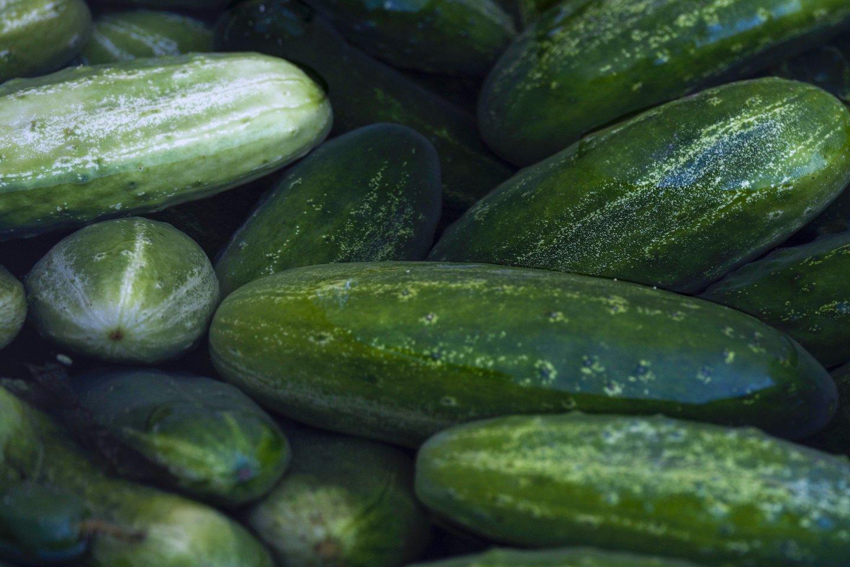Pasirinkote tinkamas sėklas, tačiau agurkai pasižymi karčiu skoniu?<br>V.Ščiavinsko nuotr.