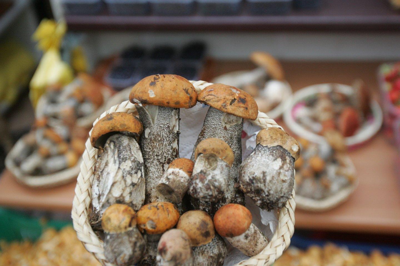 Džiaugdamiesi šiltais orais grybautojai ir uogautojai lekia į miškus.<br>A.Barzdžiaus nuotr.