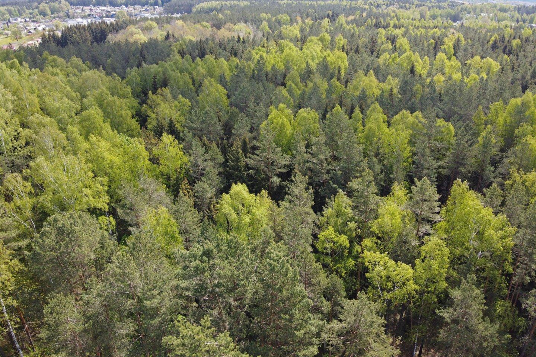 Džiaugdamiesi šiltais orais grybautojai ir uogautojai lekia į miškus.<br>A.Vaitkevičiaus nuotr.