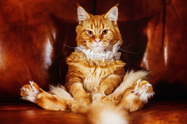 20 priežasčių, kodėl katės yra absoliučiai geriausios augintinės.<br>123rf.com nuotr.