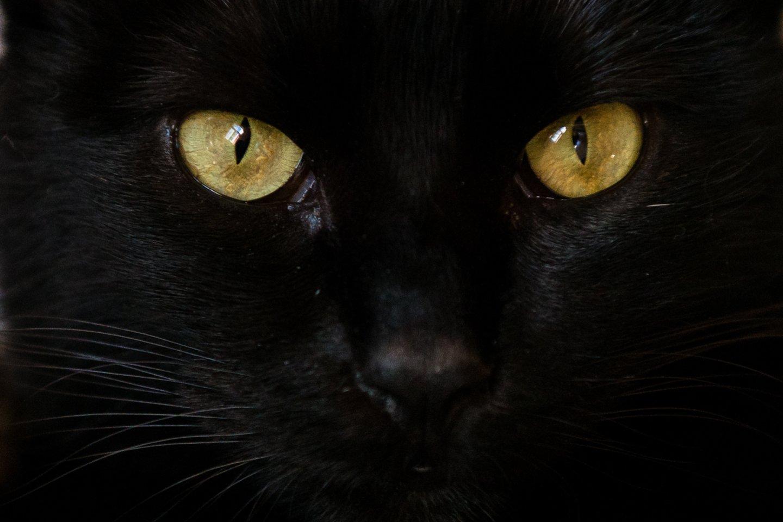 20 priežasčių, kodėl katės yra absoliučiai geriausios augintinės.<br>J.Stacevičiaus nuotr.