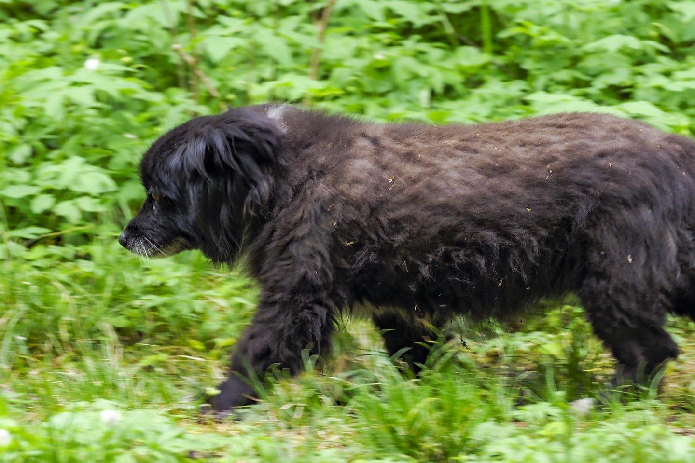 Šokiruojanti prievarta Ukmergėje: pranešė apie nuogą vyrą kieme, kuris seksualiai išnaudojo šunį.<br>Gyvūnų globos namų nuotr.