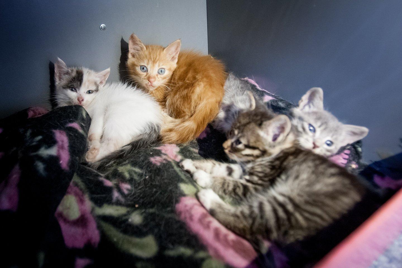 10 priežasčių, kodėl turėtumėte išgelbėti katinėlį iš prieglaudos.<br>D.Umbraso nuotr.