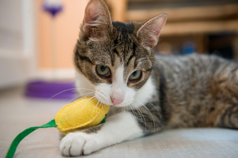 10 priežasčių, kodėl turėtumėte išgelbėti katinėlį iš prieglaudos.<br>J.Stasevičiaus nuotr.