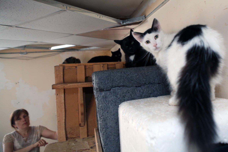 10 priežasčių, kodėl turėtumėte išgelbėti katinėlį iš prieglaudos.<br>M.Patašiaus nuotr.