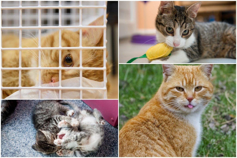 10 priežasčių, kodėl turėtumėte išgelbėti katinėlį iš prieglaudos.<br>Lrytas.lt koliažas