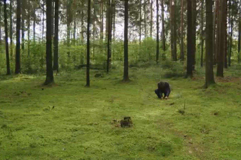 Lietuviai renka grybus, medikai perspėja apie pavojų.<br>Stopkadras