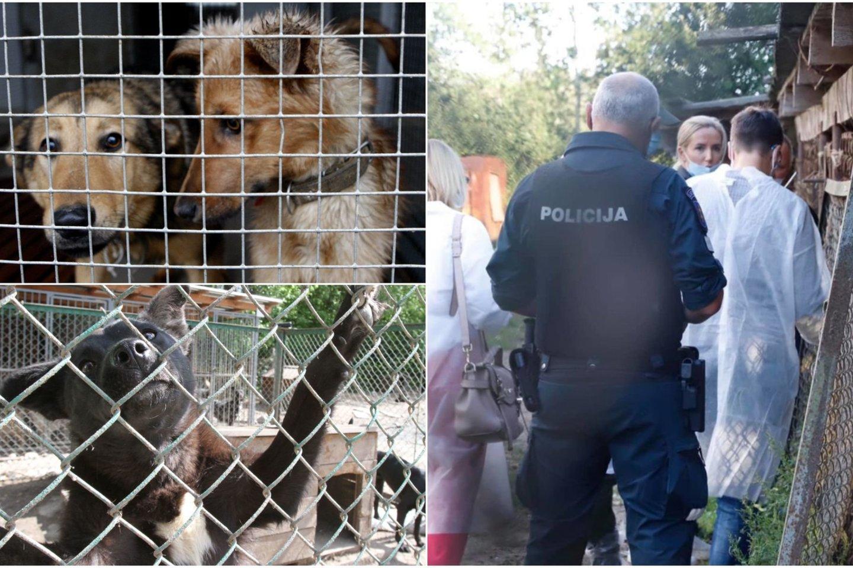Neprižiūrimi gyvūnai buvo skubiai išvežti į veterinarijos klinikas, prieglaudas, perduoti savanoriams (nuotr. Jonavoje rastas bišonų veislės šuo).<br>Lrytas.lt koliažas