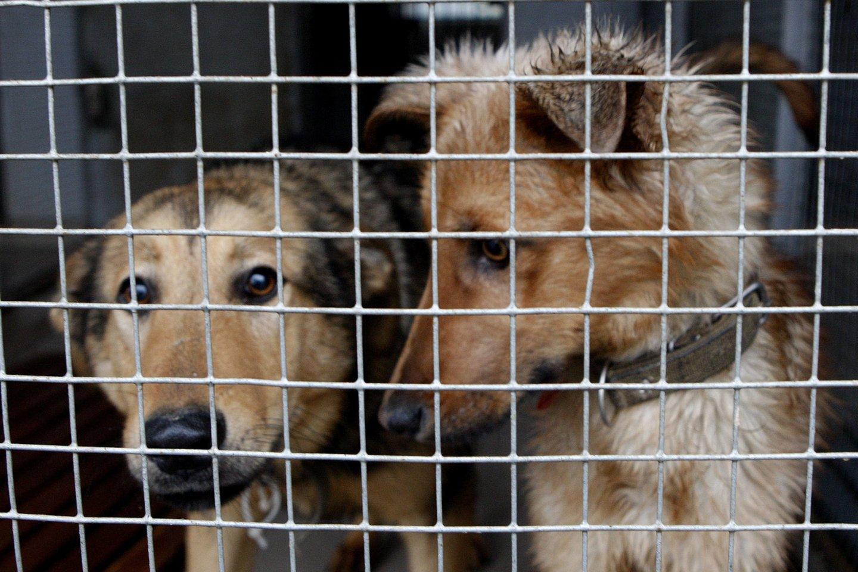 Neprižiūrimi gyvūnai buvo skubiai išvežti į veterinarijos klinikas, prieglaudas, perduoti savanoriams.<br>R.Jurgaičio asociatyvioji nuotr.