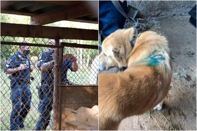 Nelegaliuose šunų veislynuose neramu ir jų gyventojams, ir savininkams.<br>lrytas.lt koliažas.