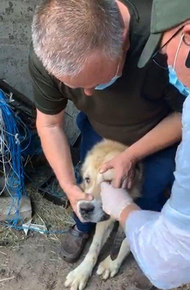 Nelegaliuose šunų veislynuose neramu ir jų gyventojams, ir savininkams.