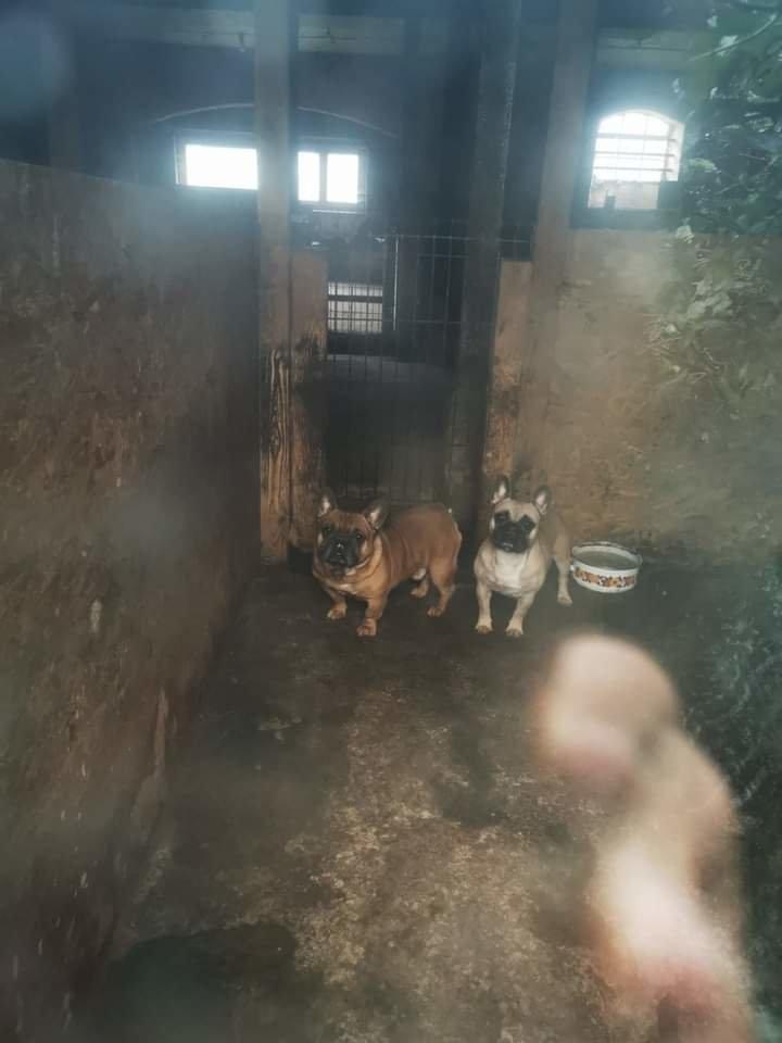 Nelegaliuose šunų veislynuose neramu ir jų gyventojams, ir savininkams.<br>Lrytas.lt skaitytojo nuotr.