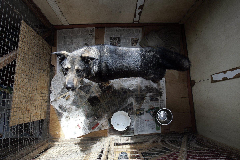 Nelegaliuose šunų veislynuose neramu ir jų gyventojams, ir savininkams.<br>V.Balkūno nuotr.