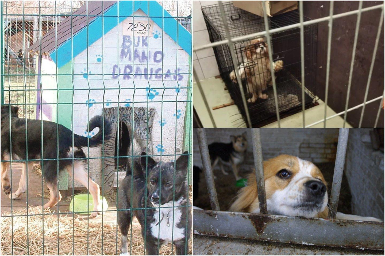 Nelegaliuose šunų veislynuose neramu ir jų gyventojams, ir savininkams.<br>Lrytas.lt koliažas