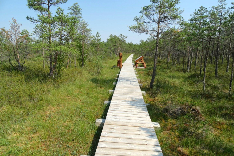 Mūšos tyrelio pažintinis takas – ilgiausias Lietuvoje lentų takas per pelkę.