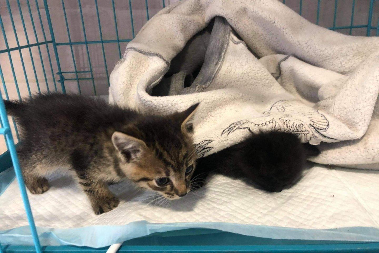 """Gelbėjo paštomato prispaustus kačiukus.<br>VšĮ """"SOS gyvūnai"""" nuotr."""