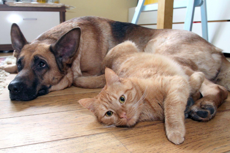 Šuo, katė, vilkšunis, augintiniai, draugystė, poilsis<br>M.Patašiaus nuotr.