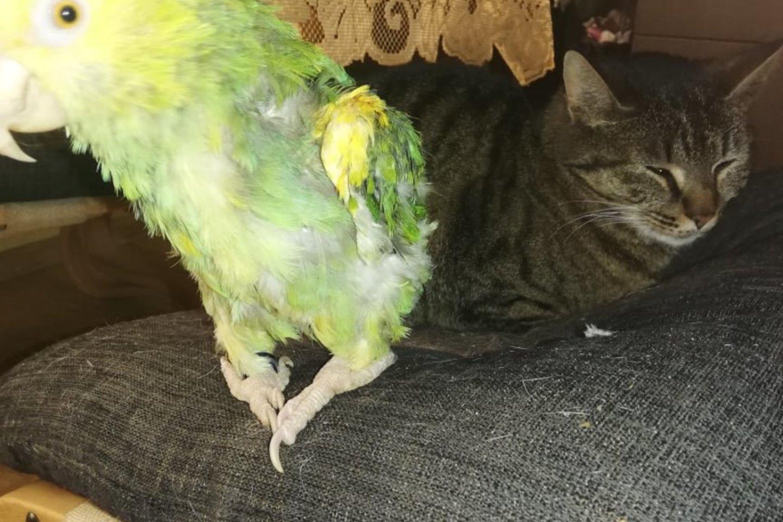 Papūga ir katė Laimė, laimėjusi gyvenimą.<br>Asmeninio archyvo nuotr.