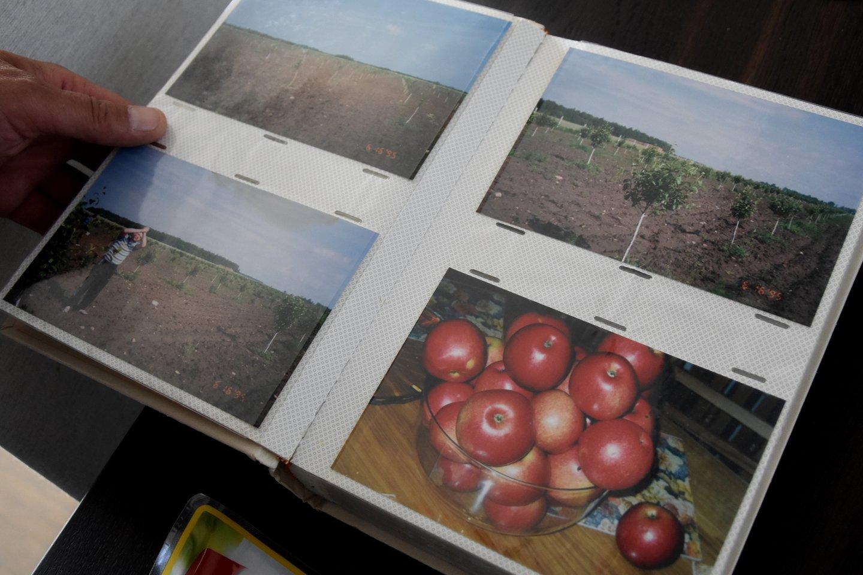 1995-ieji, – sodas po poros metų, dešinėje – pirmasis derlius.