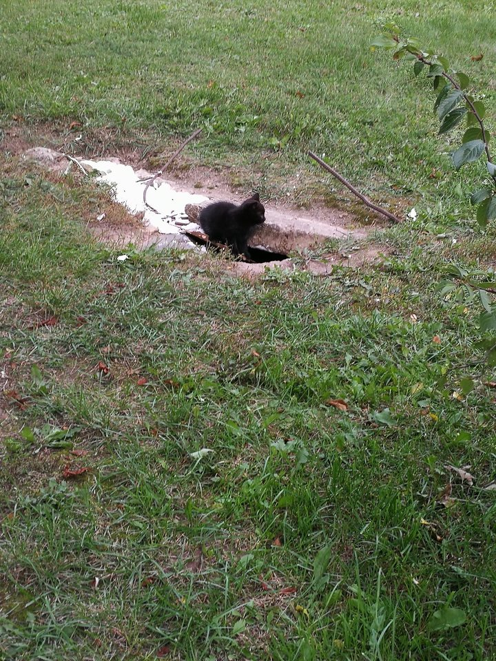 Šiaulių ligoninės teritorijoje gyvus palaidojo katę ir jos kačiukus.<br>Skaitytojos nuotr.