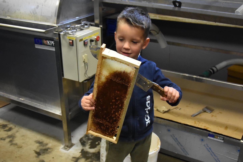 Vaido sūnus – ne būsimasis, bet esantis bitininkas.