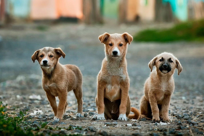 """Iš viso gyvūnus globojančioms organizacijoms """"Iki"""" išdalins daugiau kaip 30 tūkst. eurų.<br>unsplash.com nuotr."""
