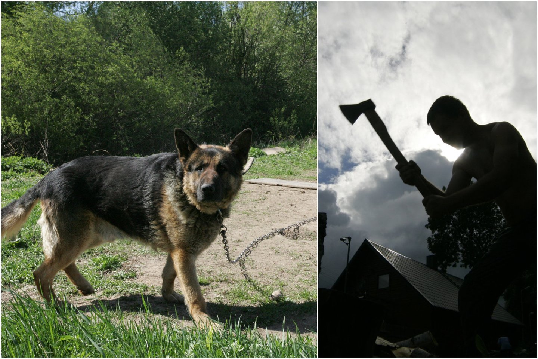 Ikiteisminio tyrimo metu paaiškėjo, kad šunį laikęs asmuo nėra šuns šeimininkas, nes tikroji šuns šeimininkė yra po tėvų mirties visą turtą, tuo pačiu ir šunį, paveldėjusi moteris.<br>Lrytas.lt koliažas