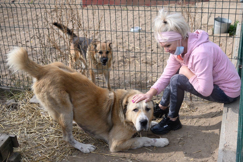 Per pusantro mėnesio – 128 tyrimai dėl nelegalaus šunų veisimo ir žiauraus elgesio.<br>V.Skaraičio nuotr.