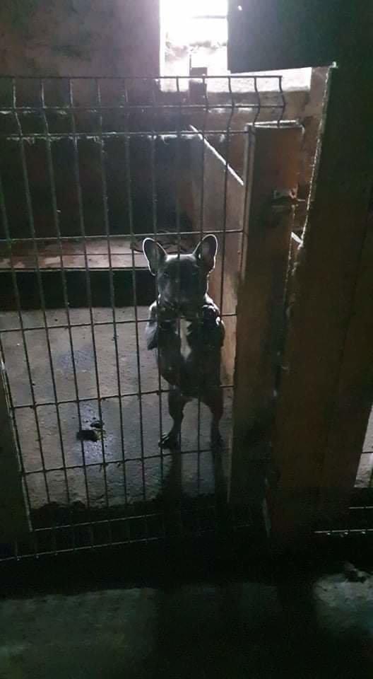 Per pusantro mėnesio – 128 tyrimai dėl nelegalaus šunų veisimo ir žiauraus elgesio.<br>Lrytas.lt skaitytojo nuotr.