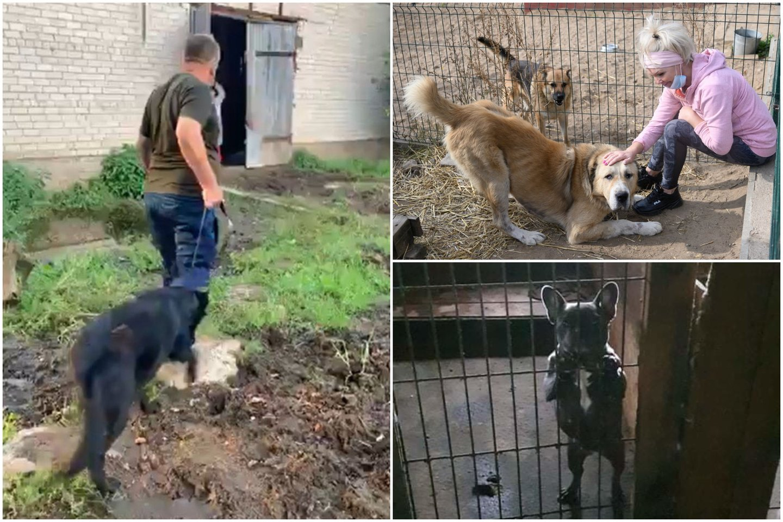 Per pusantro mėnesio – 128 tyrimai dėl nelegalaus šunų veisimo ir žiauraus elgesio.<br>Lytas.lt koliažas