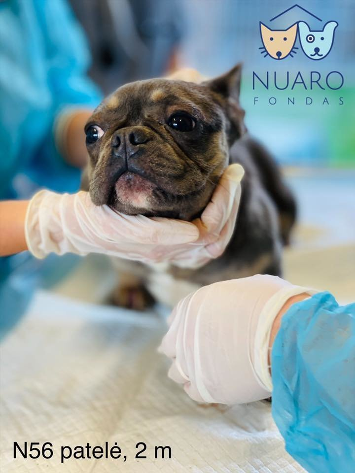 Šunys buvo laikomi baisiomis sąlygomis, bet veisyklos savininkė baudžiamosios atsakomybės išvengė.<br>Nuaro nuotr.