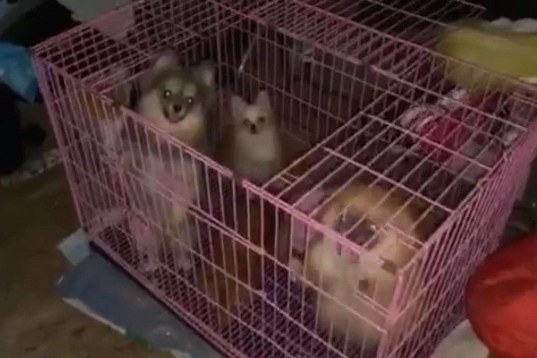 Šunys buvo laikomi baisiomis sąlygomis, bet veisyklos savininkė baudžiamosios atsakomybės išvengė.<br>Feisbuko (A.Tapino paskyra) nuotr.