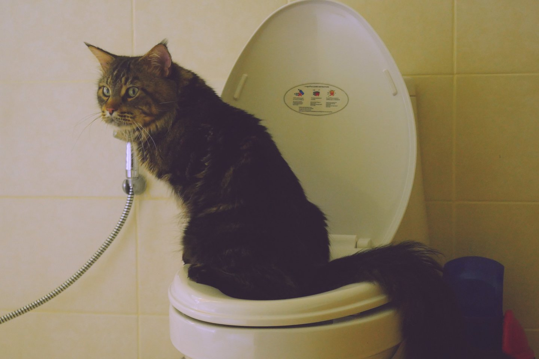 Kodėl katės šlapinasi ne vietoje namuose? Rado, kaip išspręsti šią bėdą.<br>123rf.com
